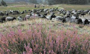 6-Tage-Seniorenreise - Südheide-Romanze